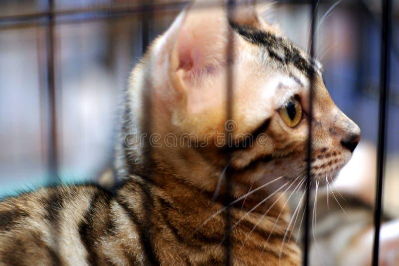 Katt i bur royaltyfri fotografi