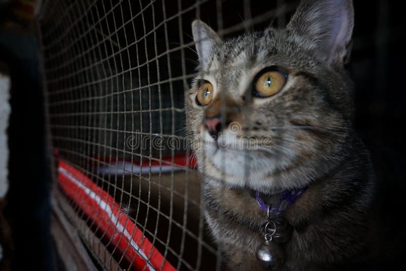 Katt i buren - grymhet till djur royaltyfri fotografi
