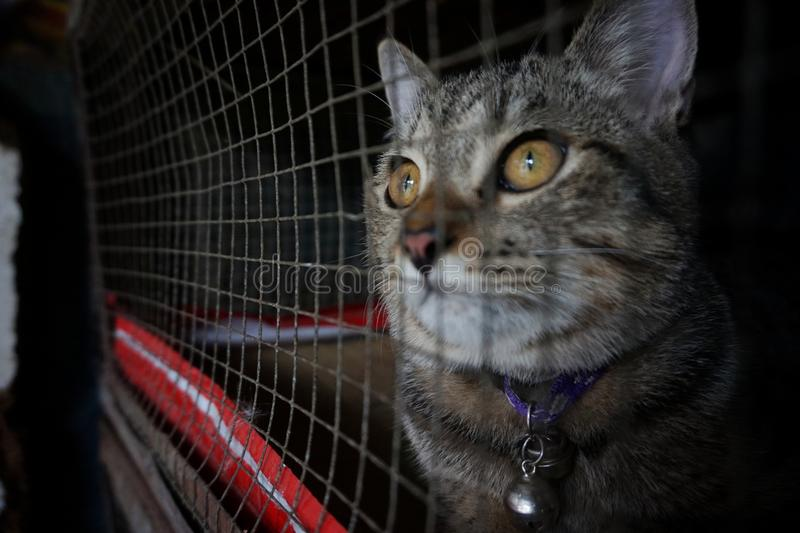 Katt i buren - grymhet till djur royaltyfria foton