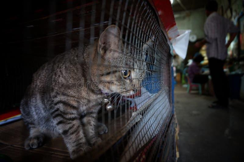 Katt i buren - grymhet till djur royaltyfria bilder