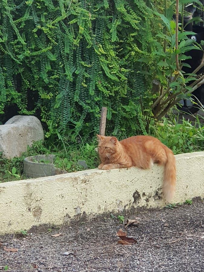 Katt i busken royaltyfri bild
