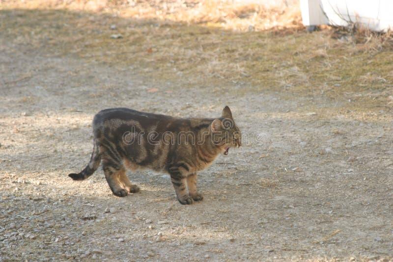 Katt i däcket som bails royaltyfri bild