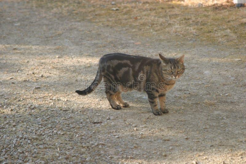 Katt i däcket som stirrar dig royaltyfria bilder