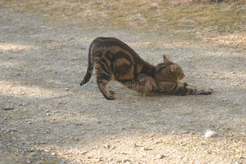 Katt i däcket som sträcks arkivbild