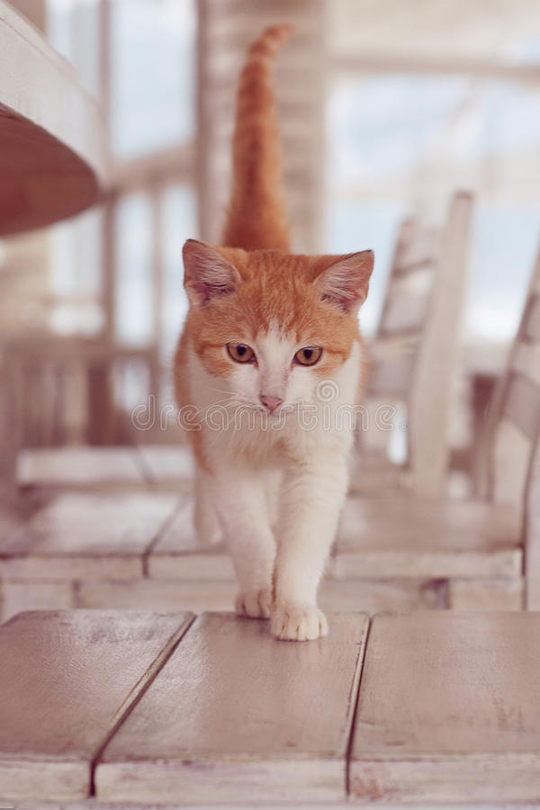 Katt i den vita inre royaltyfri fotografi