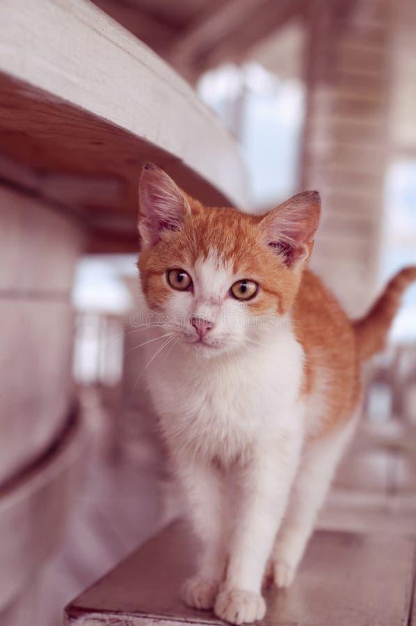 Katt i den vita inre royaltyfri bild