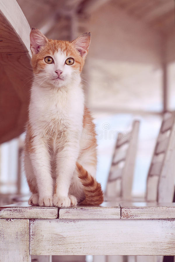 Katt i den vita inre arkivbilder