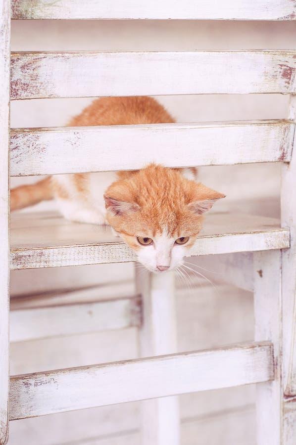 Katt i den vita inre på chear royaltyfria bilder