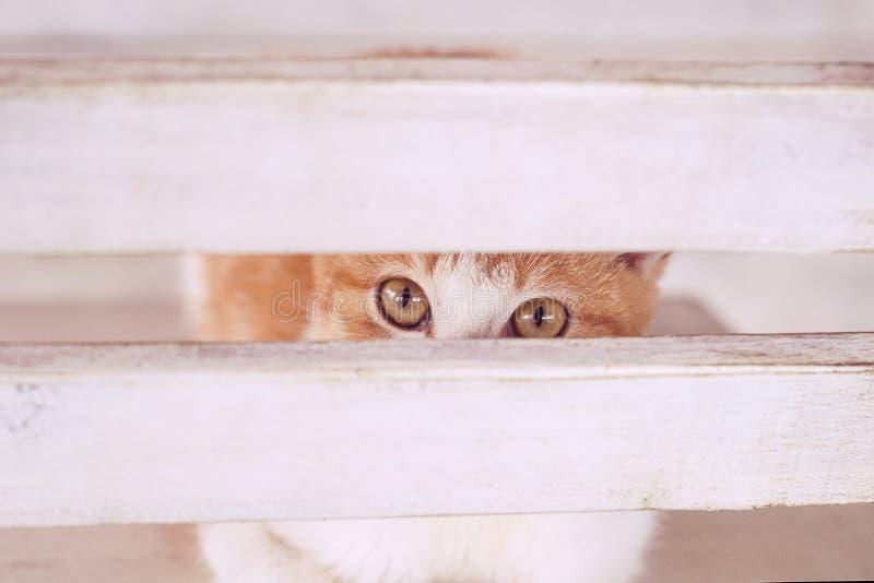 Katt i den vita inre på chear royaltyfria foton
