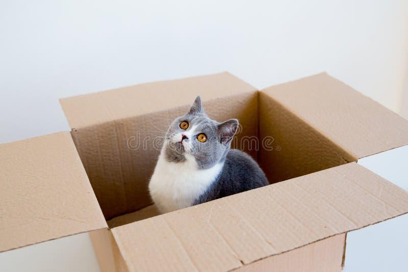 Katt i en boxas arkivbilder