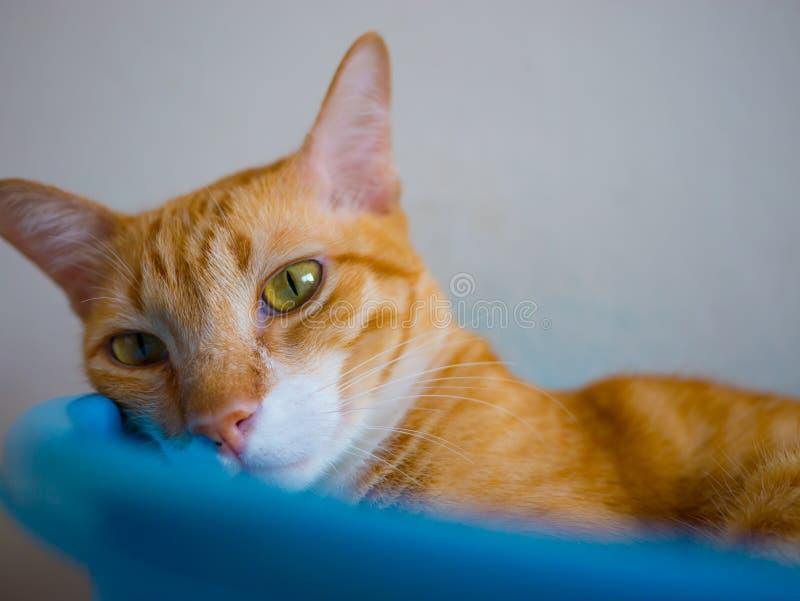 Katt i en bunke royaltyfri foto