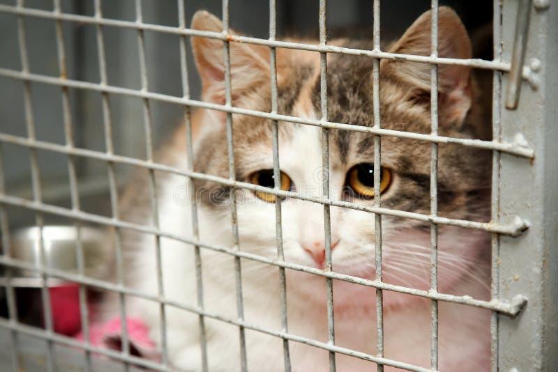 Katt i en bur i ett djurt skydd arkivfoto