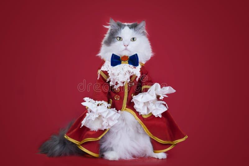 Katt i en dräkt av hertigen fotografering för bildbyråer