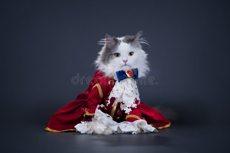 Katt i en dräkt av hertigen arkivbilder