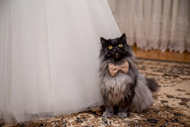 Katt i en fluga nära bröllopsklänningen av bruden arkivbild