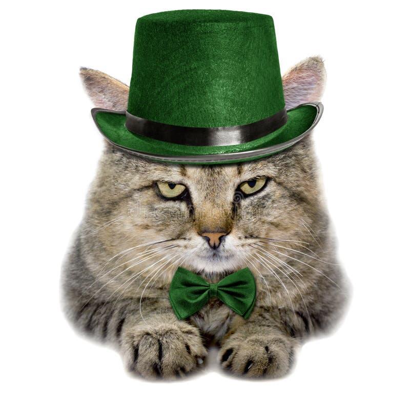 Katt i en grön hatt och bandfjäril som isoleras på vit backgroun royaltyfri bild