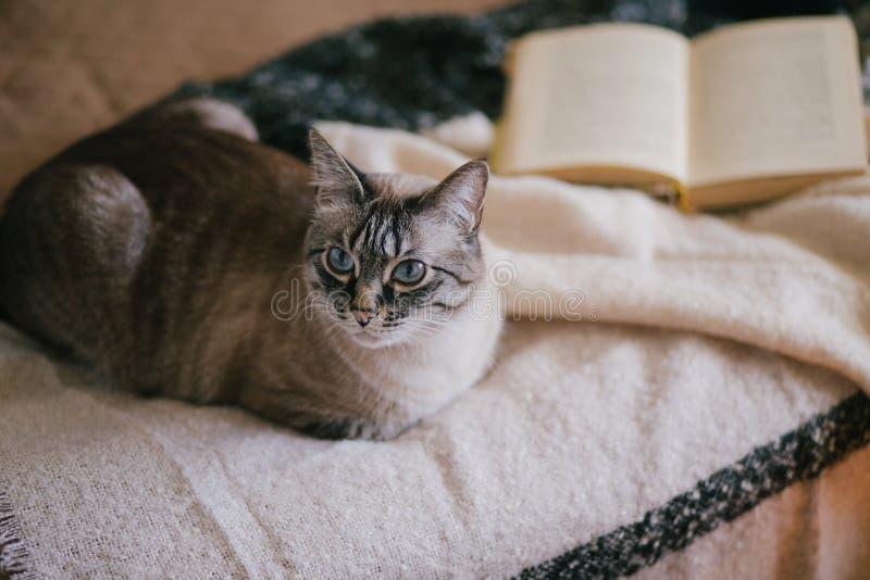 Katt i en hemtrevlig inre royaltyfria bilder
