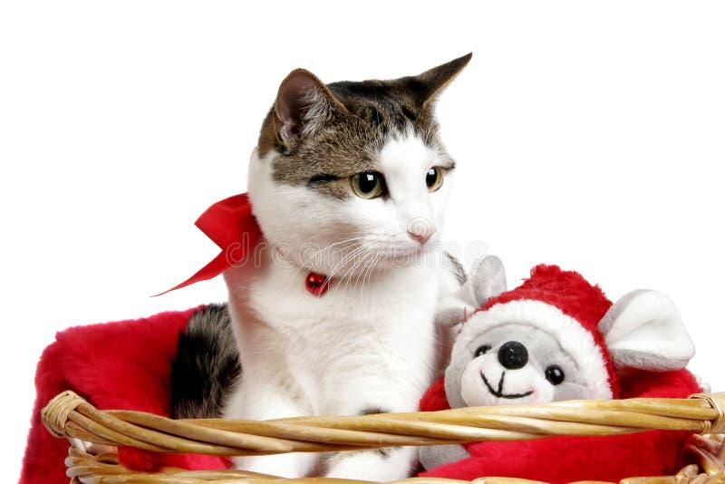 Katt i en julkorg arkivbild