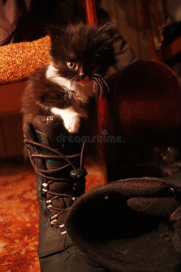 Katt i en känga royaltyfria foton