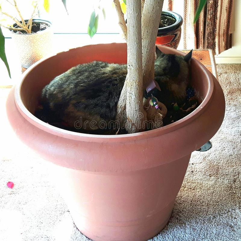 Katt i en kruka arkivfoton