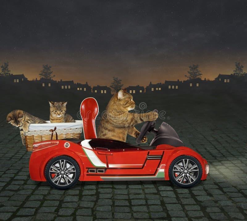 Katt i en röd bil på natten arkivbilder