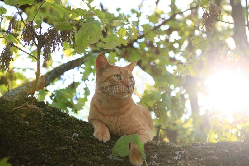 Katt i en tree arkivfoto