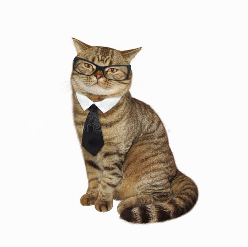 Katt i exponeringsglas och band fotografering för bildbyråer