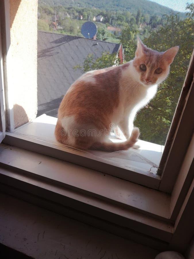 Katt i fönstret arkivbild