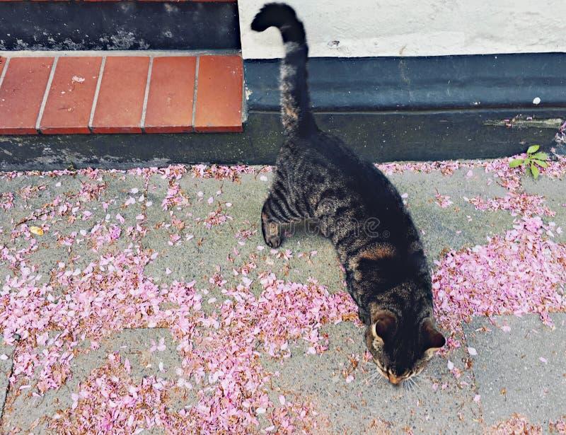 Katt i gatan arkivbild