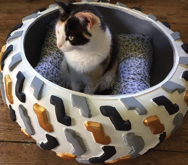 Katt i gummihjul arkivbilder