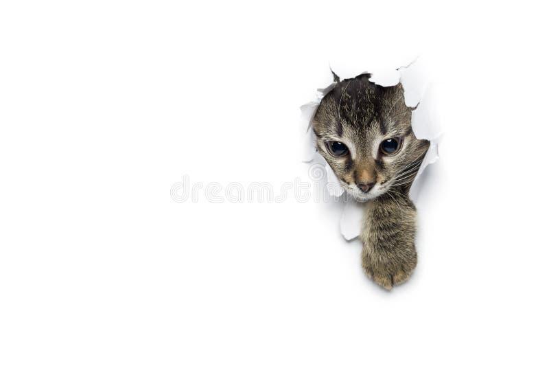 Katt i hål av papper royaltyfri fotografi