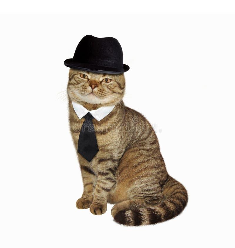 Katt i hatt och band royaltyfri fotografi
