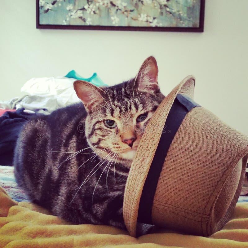 Katt i hatten arkivbild