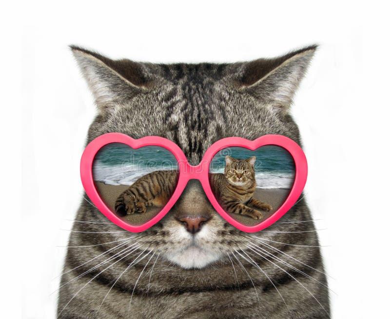 Katt i hjärta-formade exponeringsglas arkivbilder
