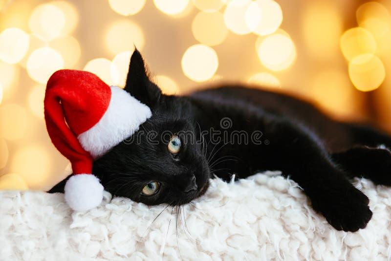 Katt i jultomtenhatt arkivfoto