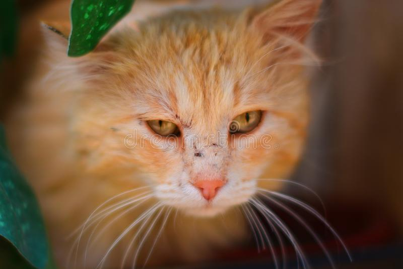 Katt i närheten royaltyfria bilder