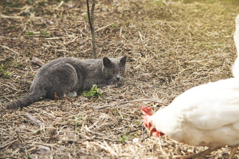 Katt i natur royaltyfria bilder