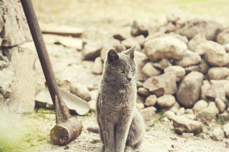 Katt i natur arkivbilder