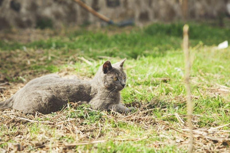Katt i natur arkivbild