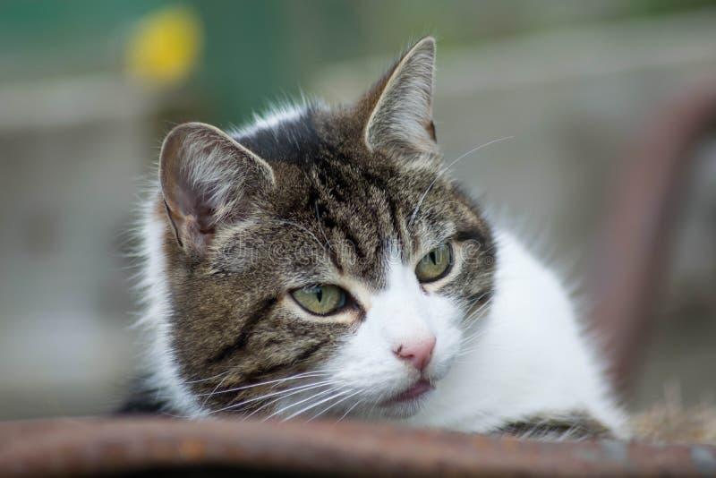 Katt i skottk?rra fotografering för bildbyråer