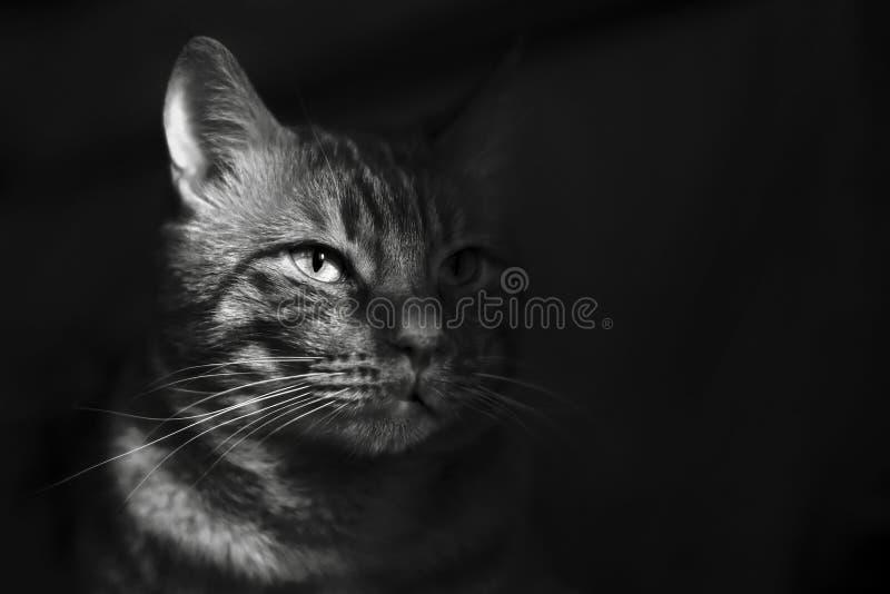 Katt i skugga arkivbilder