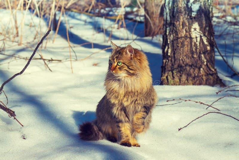 Katt i snö arkivbilder