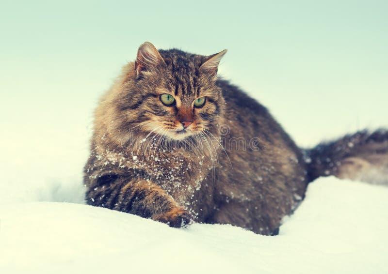 Katt i snö royaltyfria foton