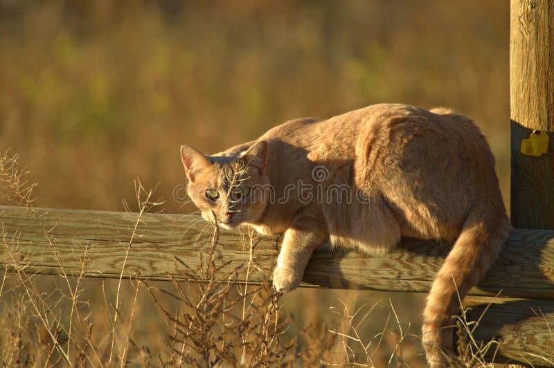 Katt i sunen arkivbild