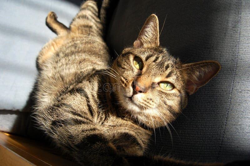 Katt i sunen fotografering för bildbyråer