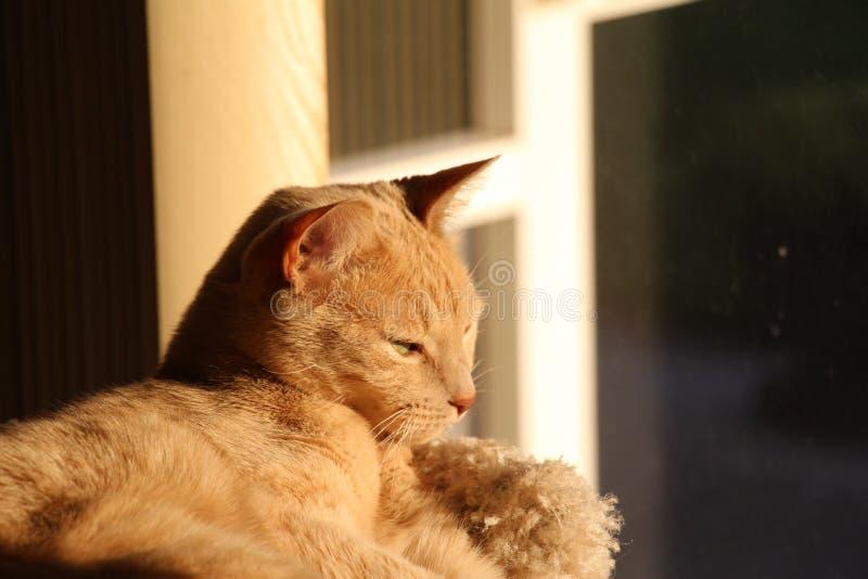 Katt i sunen royaltyfria foton