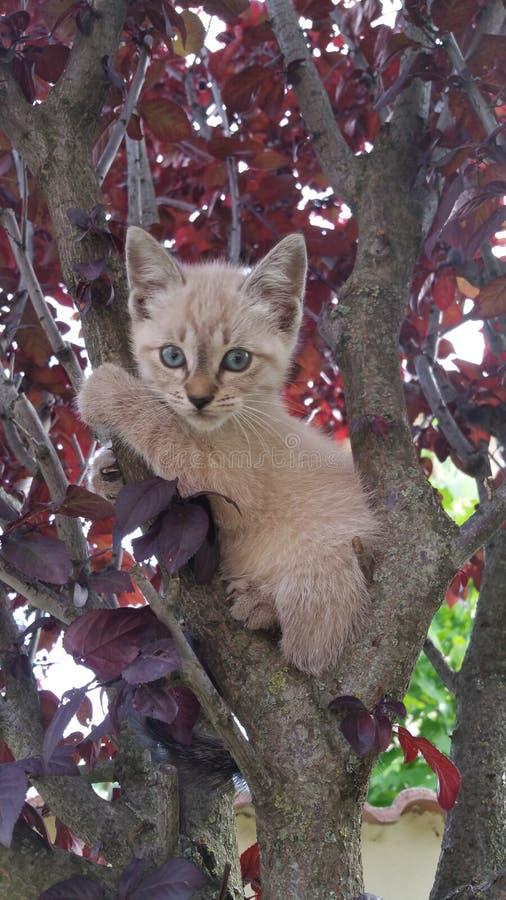 Katt i träd 3 arkivbild