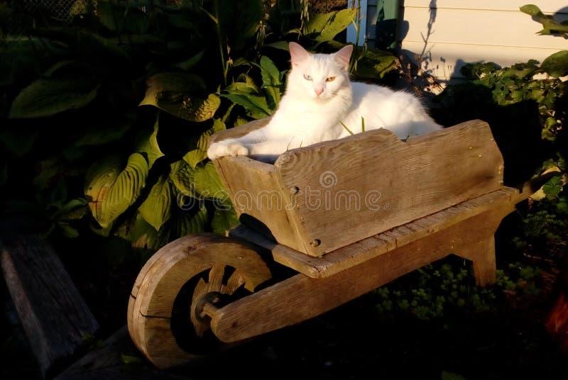 Katt i trädgården arkivbilder