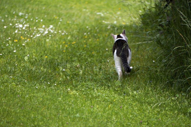 Katt i trädgården royaltyfri foto