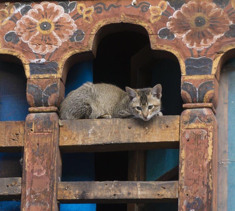 Katt i traditionellt hus Thimpu bhutan kungarike royaltyfria bilder